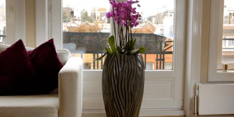 Welke plant is geschikt voor de woonkamer