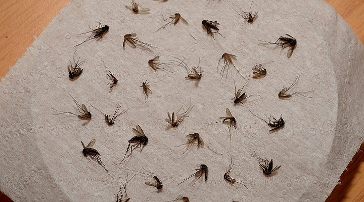 5 tips tegen muggen in huis