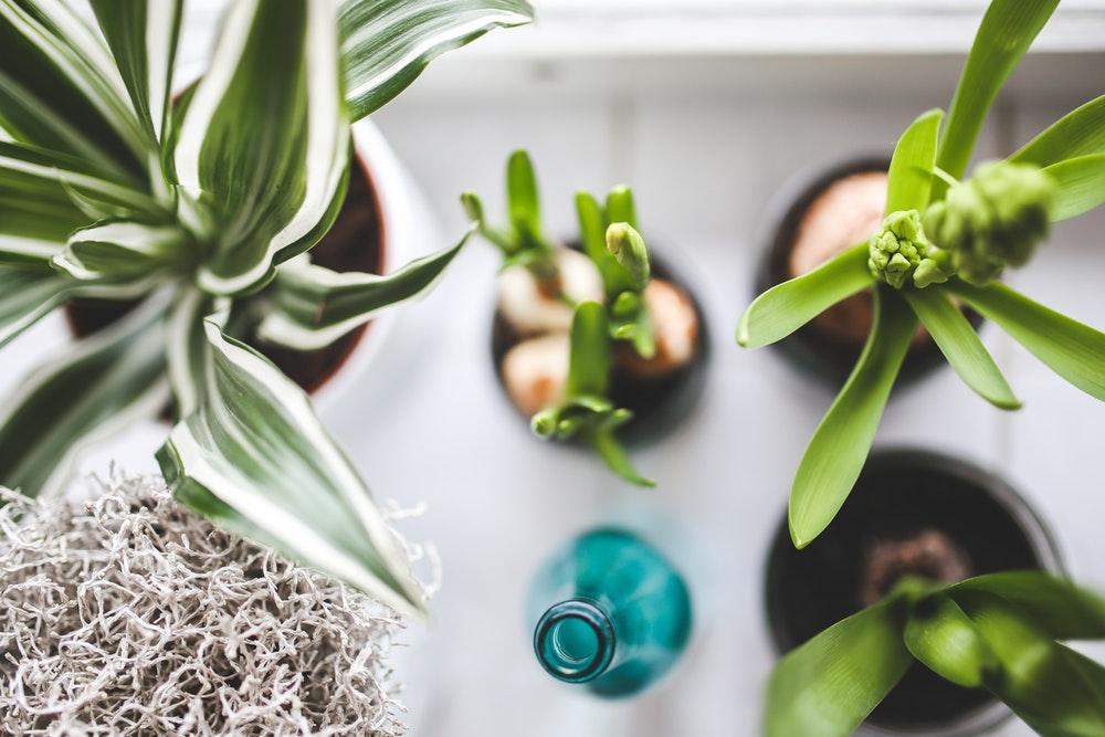 huis planten