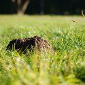 Mollen bestrijden op een diervriendelijke manier