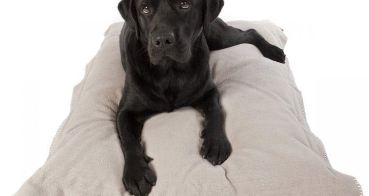 Nieuw hondenbedden voor elke interieurstijl