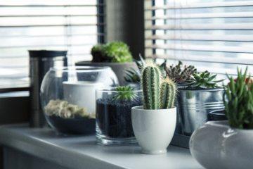 Kamerplanten- Ideale aanvulling voor je huis