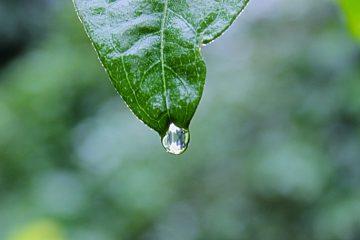 Voordelen van een eigen beregeningssysteem in de tuin